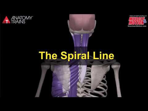Muscle&Motion POSTURE. Kyphosis, The Spiral Line