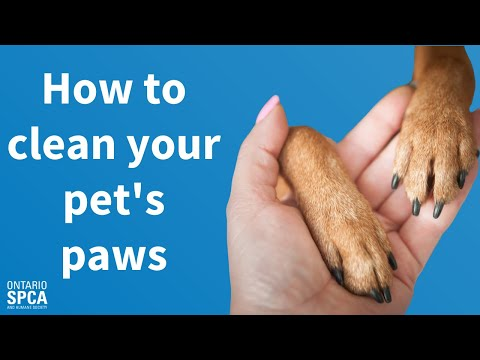 How to: Clean your pet's paws in the winter