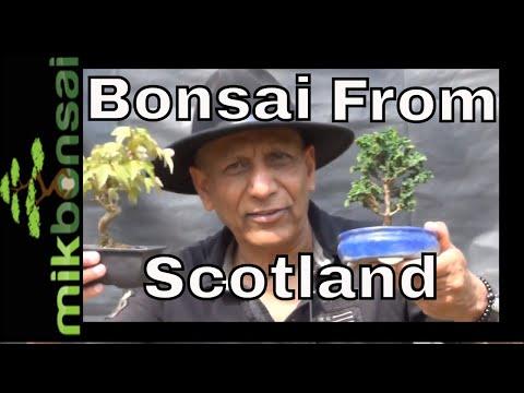 Bonsai Trees from Scotland