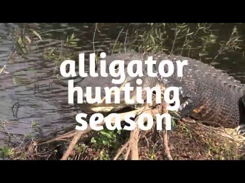 Gator Hunt Permit: Get Yours At OCTC
