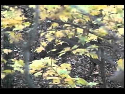 Southern Illinois Whitetail Buck Scouting on Rocky Branch Outfitters Ground