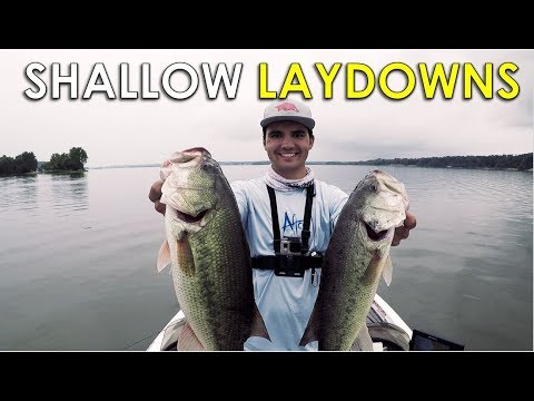 How to Fish Shallow Wood for Early Fall Bass