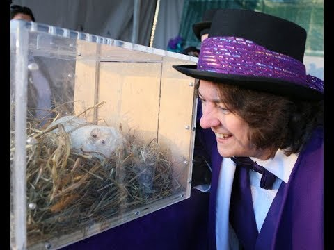 'It was his time': Attention-loving spring prognosticator Wiarton Willie dead at 13