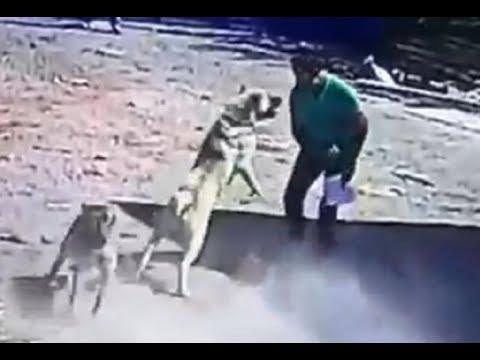 Kangal Dog Attacks a Man!!!