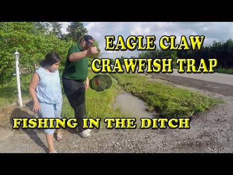 Eagle Claw Crawfish /  Minnow Trap Crawfishing in the Road Ditch