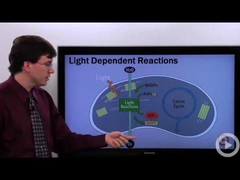 Light Dependent Reactions(HD)