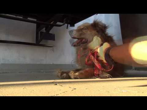 An Amazing Dog Rescue Story! Please Watch & Share!.mp4