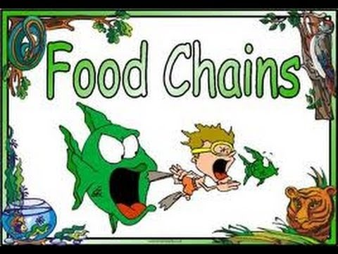 Food Chains ,Food Webs,Energy Pyramid in Ecosystems-Video for Kids
