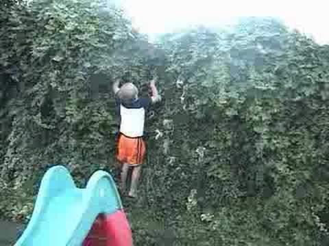 Jack climbing the ivy