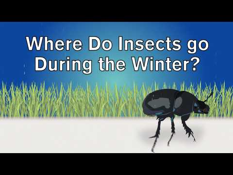 Where do insects go during the winter?