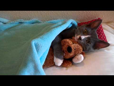 Cute Kitten Hugs His Teddy Bear (with Music)