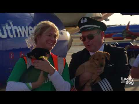 Lucky Dog Animal Rescue Saves 62 Animals From Puerto Rico In Partnership With SouthWest Airlines