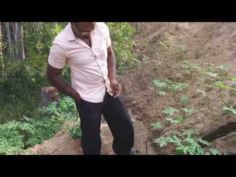 underground water using coconut and pendulum for well and borewell