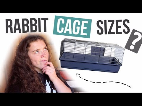 Is There A Minimum Rabbit Cage Size?