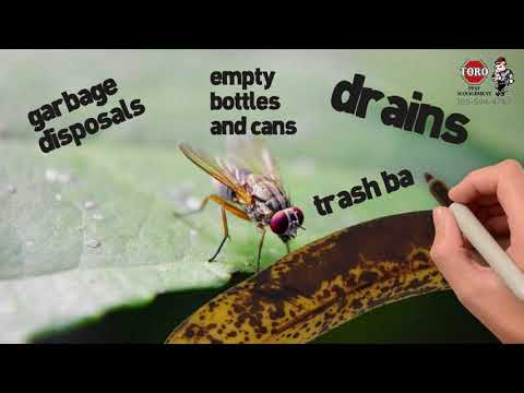 Fruit Flies Control in Miami Dade and South Florida.