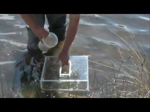 How To Catch Live Poddy Mullet [ Live Bait ] - REEL IT IN