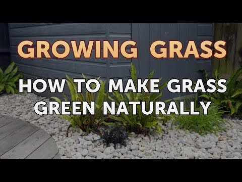 How to Make Grass Green Naturally