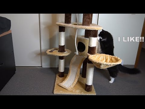 Favorite Cat Activity Tree Unboxing and Review