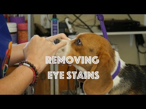 Removing Eye Stains