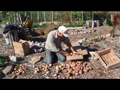 How To Store Potatoes For The Winter