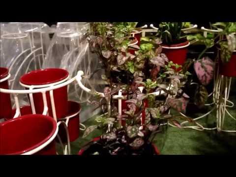 House Plants Arrangement ideas | Indoor/Outdoor Plants for indirect sunlight