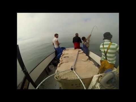 uk commercial bass fishing(rod and line)