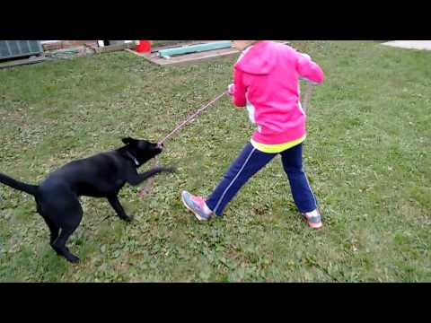 Dog tricks with Kaleigh!