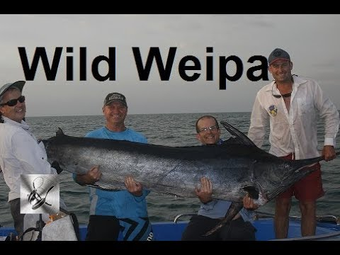 Black Marlin Wild Weipa | The Hook and The Cook