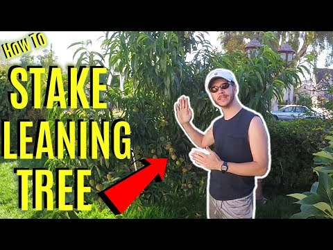 How To Stake & Fix a Leaning Tree Easily! -Jonny DIY