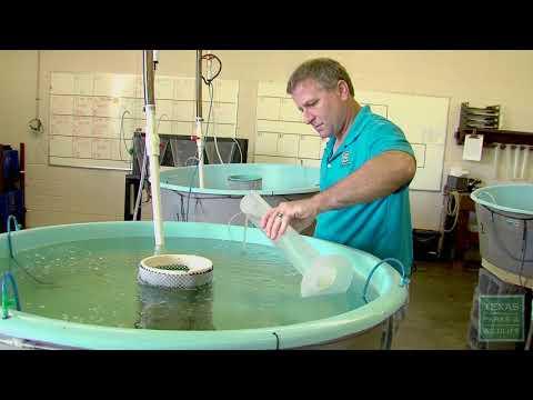 Sea Center Fish Stocking - Texas Parks & Wildlife [Official]