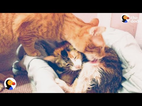 Cat Dad Won't Leave Partner's Side While Giving Birth | The Dodo