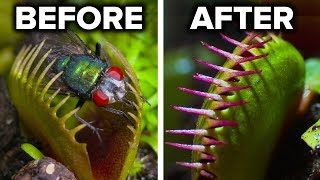 Facts About Carnivorous Plants