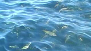 The best Yellowtail fishing.