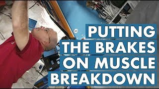 Putting the Brakes on Muscle Breakdown