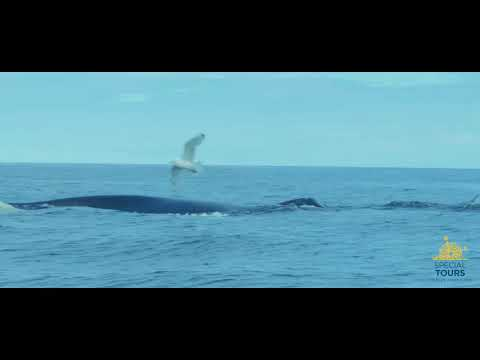 Whale Watching from Reykjavik with Special Tours