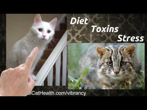 Congestive Heart Failure in Cats - Natural, Effective Treatment and Prevention