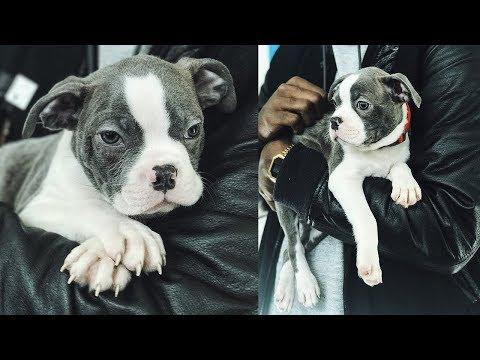 Puppy Cuteness OVERLOAD!! MEET BOLT! Puppy Vlog