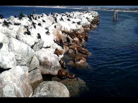 Sea lions Monterey California