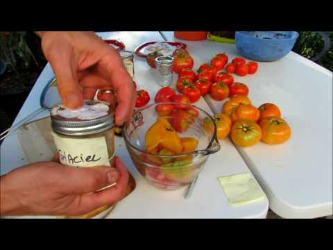How to Easily  Make Heirloom Tomato Sauce, Save Tomato Seeds & Freeze Sauces: Processing Tomatoes!