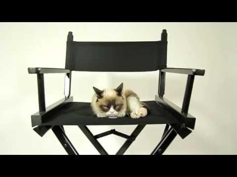 What Makes Grumpy Cat Happy?
