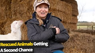 10 Rescued Animals Getting A Second Chance At Life | Animal Rescue Stories