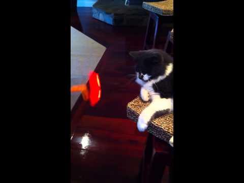 Motion sickness Cat