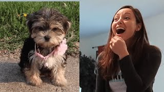 Best Gift EVER | People Surprised with Pets for Christmas