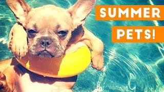Coolest Summer Pets of 2018 Compilation | Funny Pet Videos