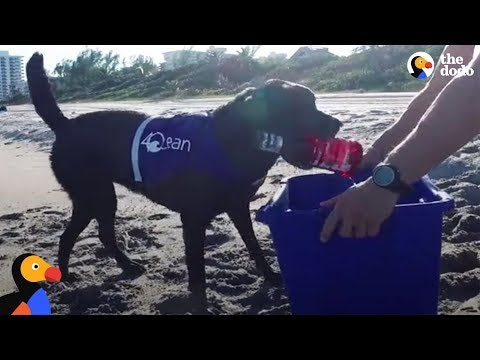 Dog Recycles Trash From the Ocean and More: Why We Recycle Compilation | The Dodo Top 5