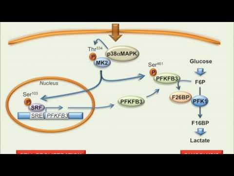 How to stop cancer cell proliferation