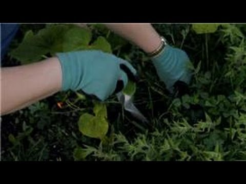 Flower Gardening : How to Get Rid of Clover in Your Flower Gardens