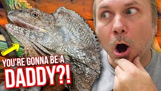 OMG! IS MY FRILLED DRAGON GONNA BE A DADDY??!! | BRIAN BARCZYK