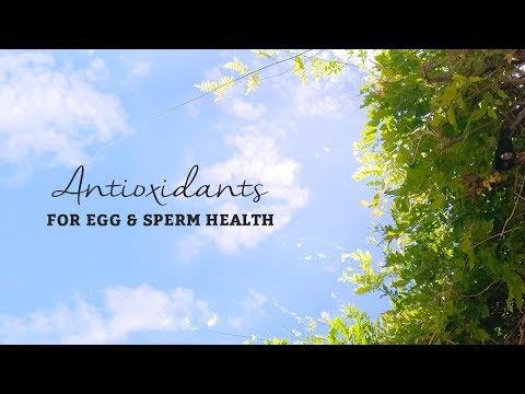 Antioxidants for Egg & Sperm Health
