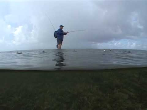 Grouper on fly - Rainy day in the Seychelles -  The Raw Files